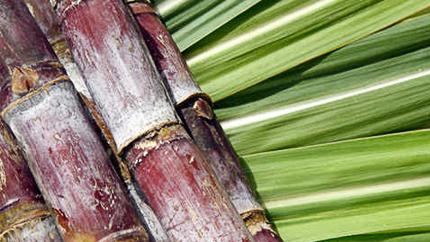 Afrique du sud :le prix de référence du sucre