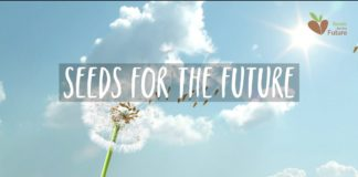 Huawei Seeds For The future